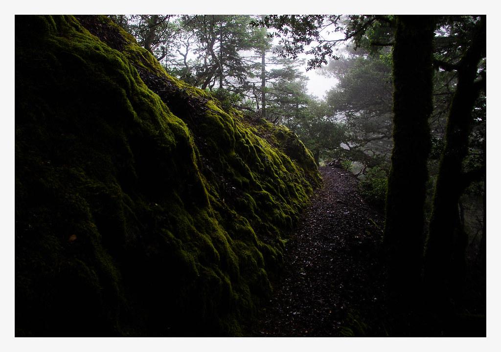 Dark and Damp Trail