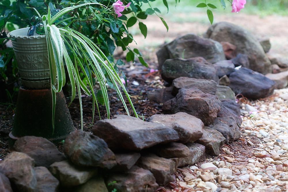 Morning in Our Garden