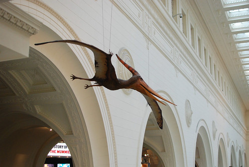 Sophie's favorite dinosaur, the pterodactyl