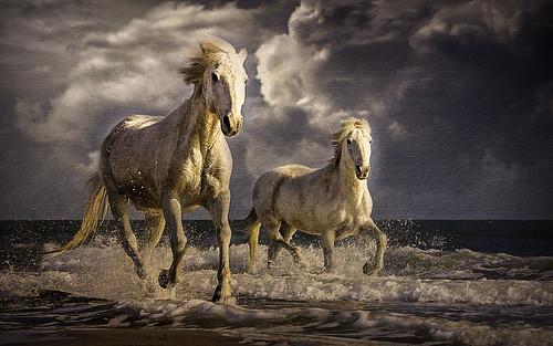 horses on beach-6