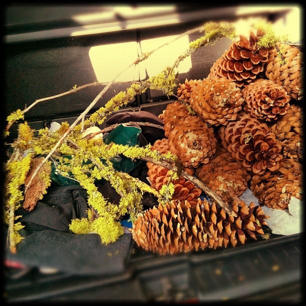 pinecone1