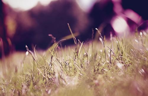 light sunset summer plant green nature grass photoshop canon project eos rebel 50mm austria mac europe dof sundown bokeh f14 meadow days adobe land late 365 41 lightroom t3i 600d itslegitx