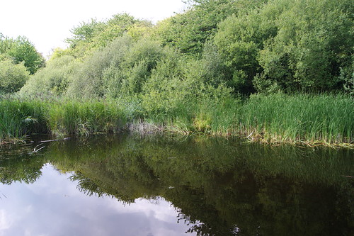 Berengrave Nature Reserve (Rainham Chalk Pit)