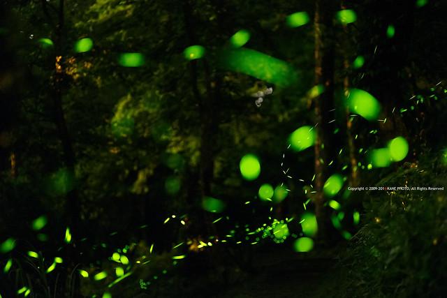 Firefly Galaxy -IMG_9893fu
