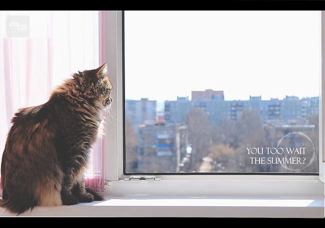 Cat & Springtime