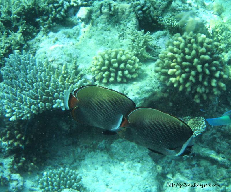 Рыбы Мальдив