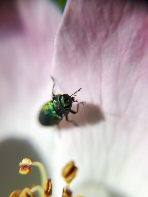 Shot with: Samsung Galaxy S5 Neo & Macro lens (TaoTronics Phone Camera Lens Clip Kit)