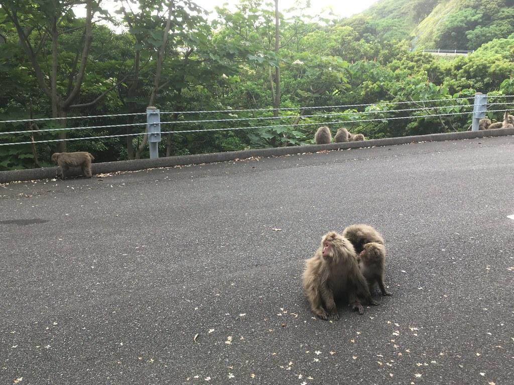ナチュラルに道路にたたずむ猿