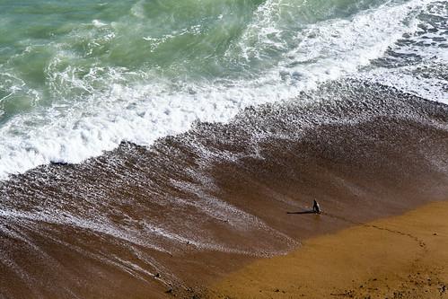 Penguin on the Beach by Benjamin Hafele