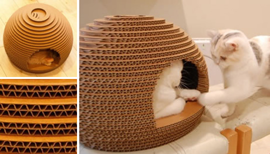 cats&cardboard_015