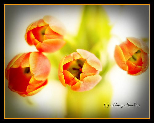 tulips by Nancy Hawkins