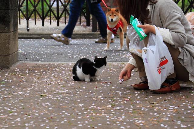 ムック犬と猫 1