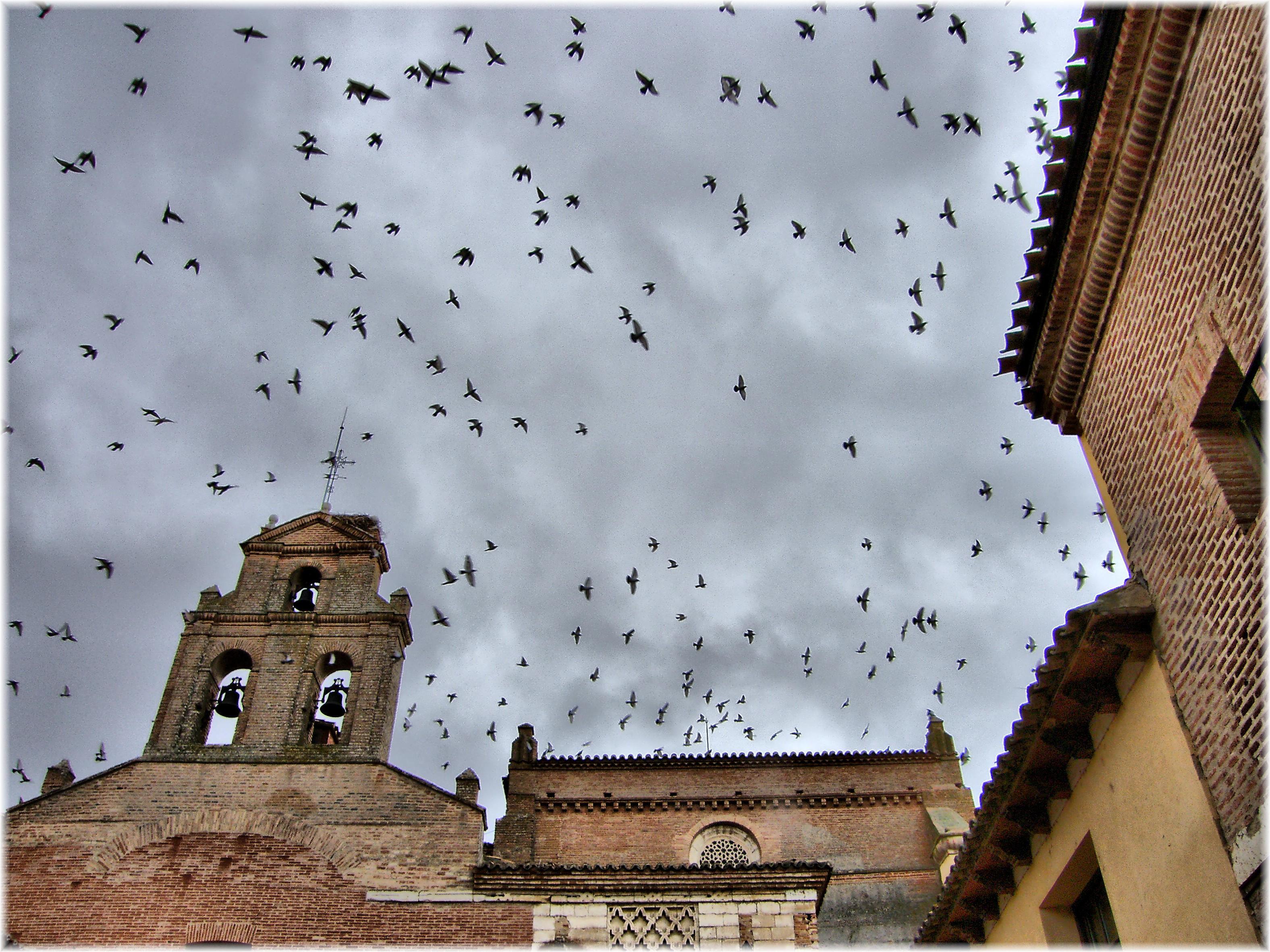Baños Arabes Tordesillas:2643-Convento de Santa Clara en Tordesillas (Valladolid)