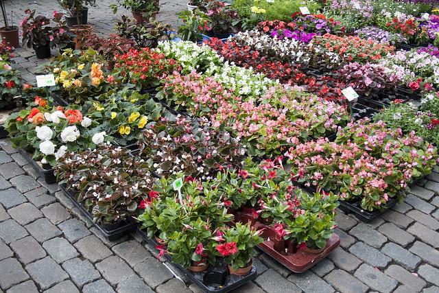 Flores en la Grand Place