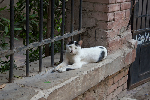 Kitler street cat! by Ester Meerman