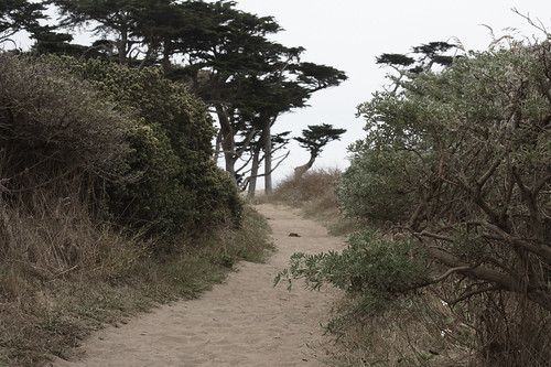 Hiking Trail, Point Reyes National Seashore