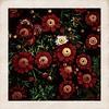 #redflowerpower