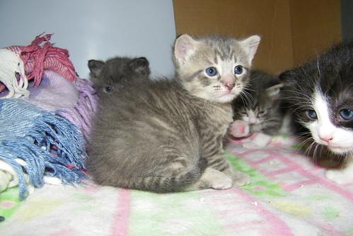 kitten litter