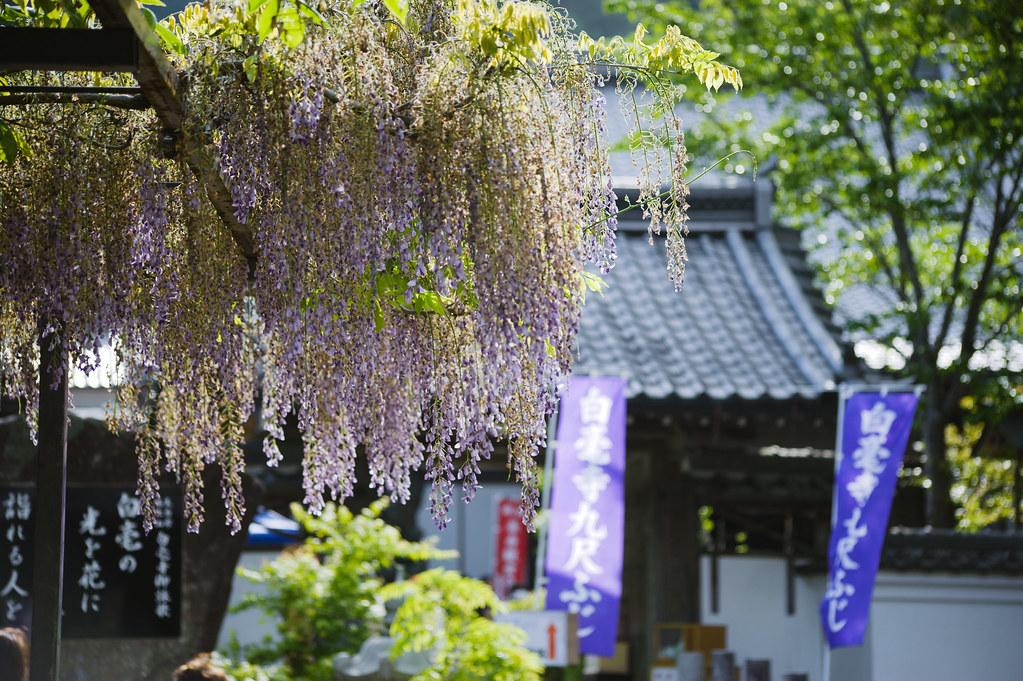 Byakugouji Temple