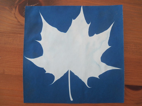 Maple Leaf Sunprint from Toronto