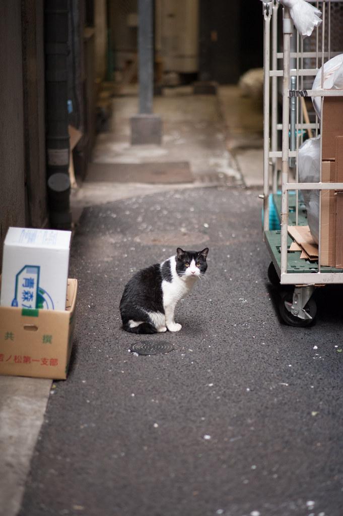 猫 2012/06/02 DSC_4468