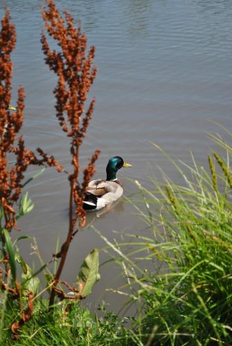 lake, gardens, and yarn 153