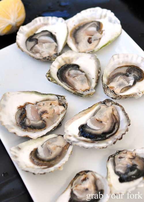 Angasi oysters at Eyre Peninsula