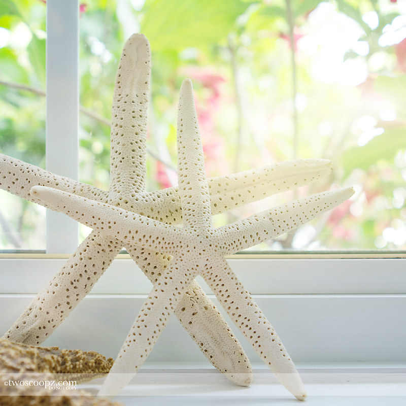 starfished windowsill