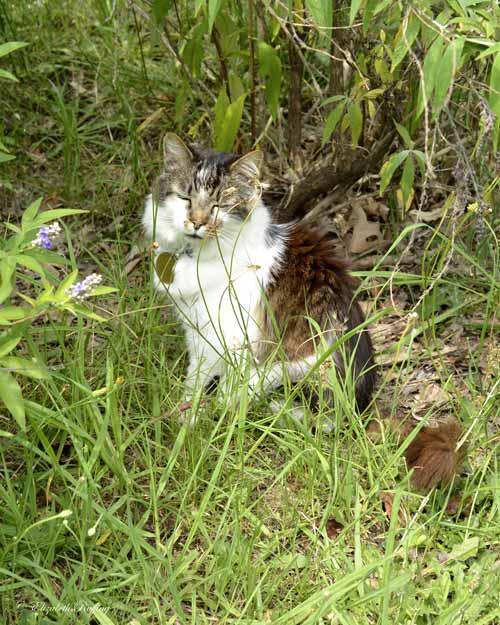 Sleepy kitty cat under the bushes