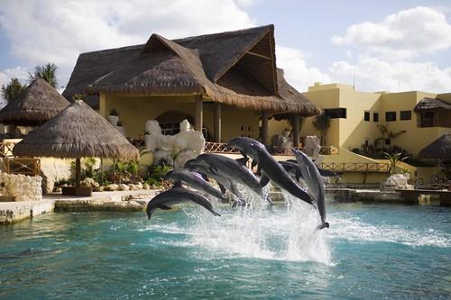 Dolphinaris 3