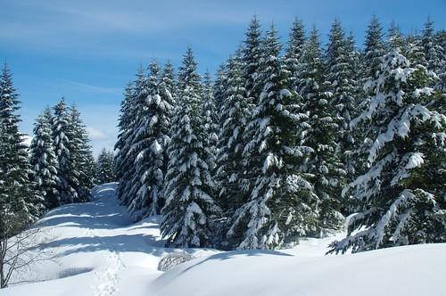 montagne pin neige snowshoes pyrénées pirineos ariège lers raquettes épicea couserans cougneit