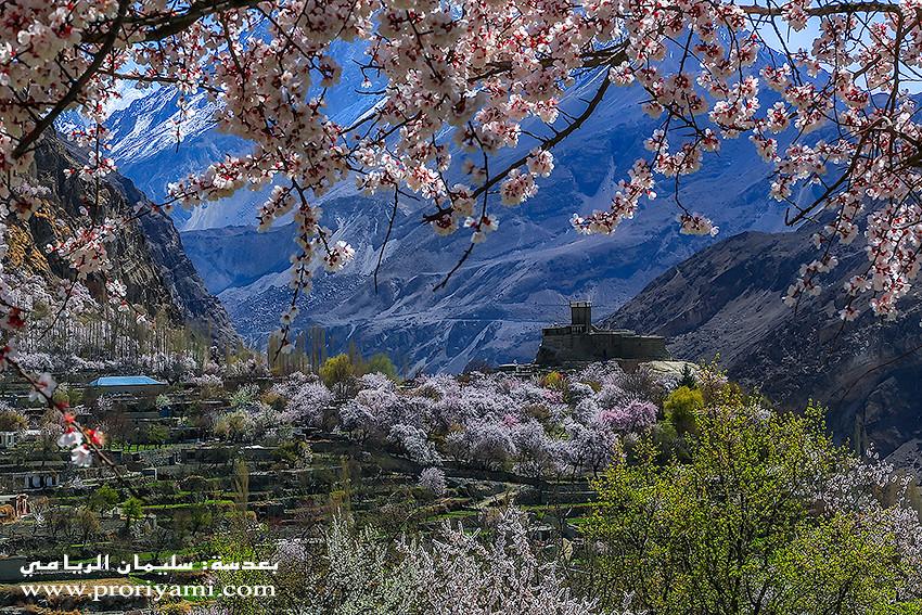 """Altit, Hunza blossom """"Pakistan""""."""