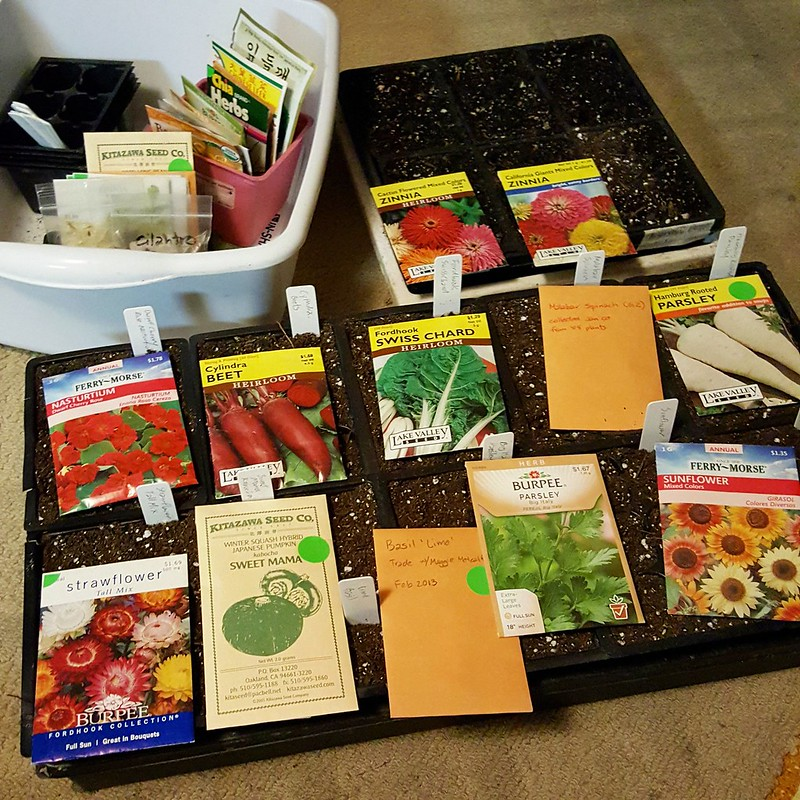 Late night seed sowing.