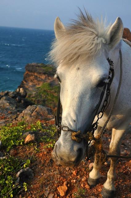 Palpalokada Horse