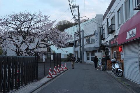 さくらの街 ぐみょうじ観音通り 桜まつり
