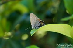 161: Butterfly