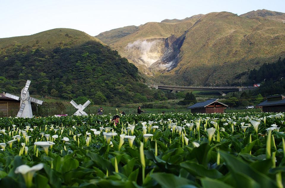 冷水坑、竹子湖半日遊
