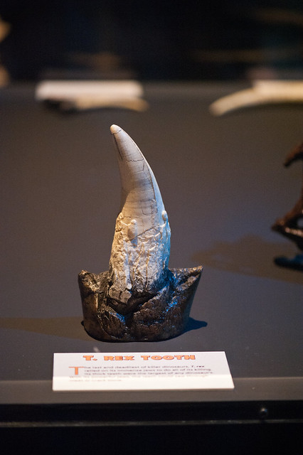 022 dinosaur tooth