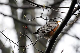 Bird_123_processed_lo res