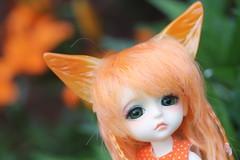 Foxy Flynn