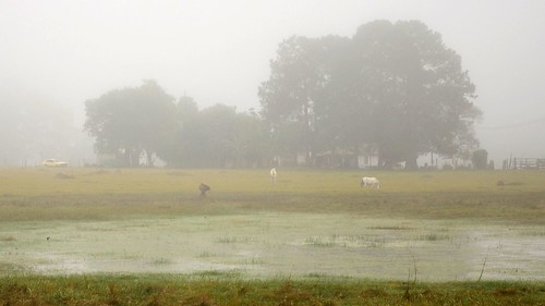 Misty morning - DSC_0336e