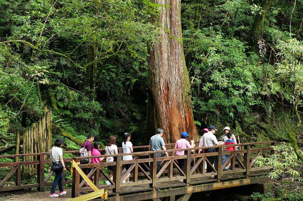 巨木群,與往拉拉山的路上-075