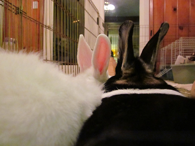 Oreo and Jumbles ears.