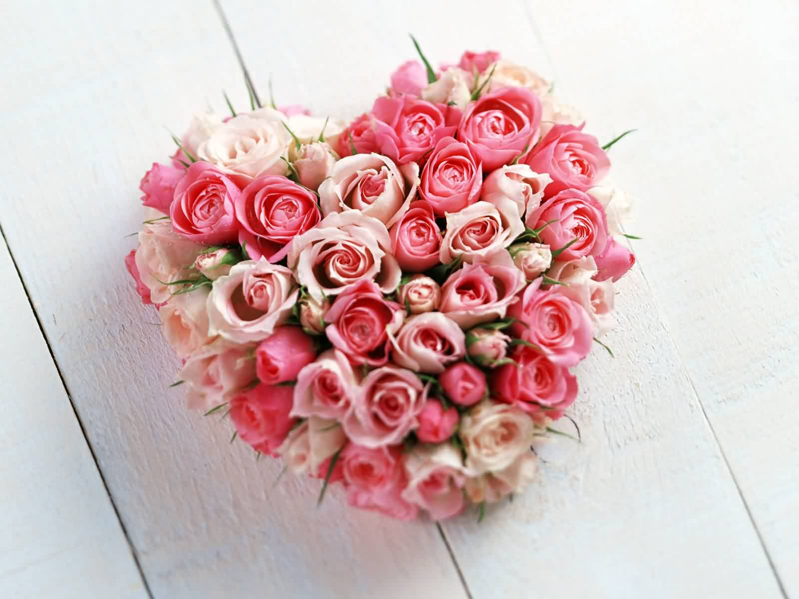 Фото цветы миллион роз