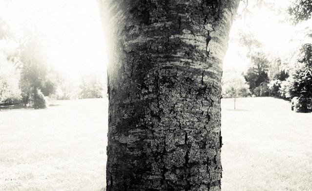 2012apriltree