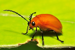 Life imitating art - cartoon character beetle