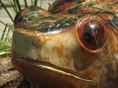 Señor Frog en Oaxaca! Happy International Day of Biological Diversity / World Environment Day #rtyear2012