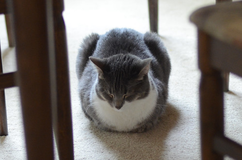 Loaf of Roxy