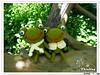 情侶.蛙4