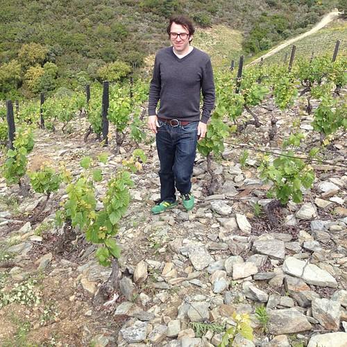 Quinta dos Murcas Douro Vineyards